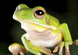 Do Frogs Have Bad Genes